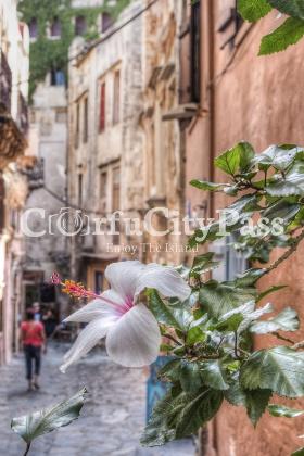 Corfu Old Town